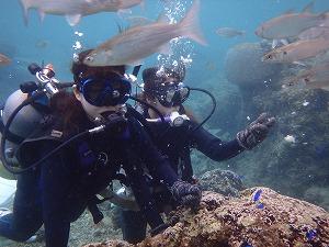 魚と一緒に体験ダイビング