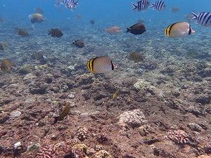熱帯魚沢山のシュノーケリングポイント