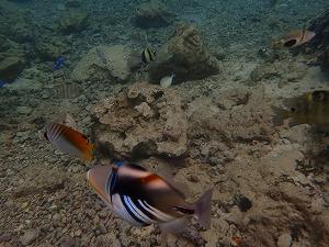 シュノーケリングで魚観察