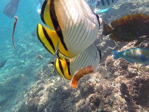 シュノーケリング餌付けで熱帯魚がこんなに近い