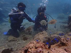 熱帯魚たくさんの海で体験ダイビング