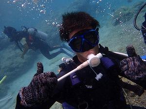 体験ダイビング海中写真