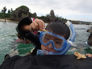 シュノーケリングで海の生き物とふれあい