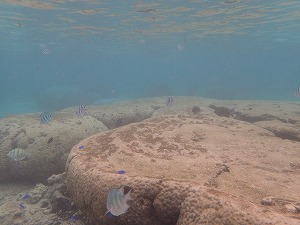 透明度抜群の海でシュノーケリング