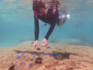 シュノーケリングの餌付けに集まる熱帯魚たち