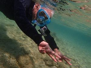 透明度抜群の海で楽しむシュノーケリング