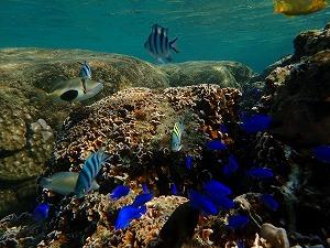 沢山の熱帯魚達がいるダイビングポイント