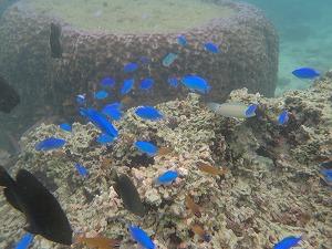カラフル熱帯魚と一緒にシュノーケリング
