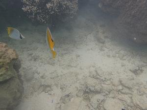 カラフル熱帯魚とシュノーケリング