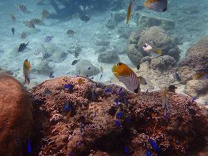 沖縄シュノーケリングビーチお魚
