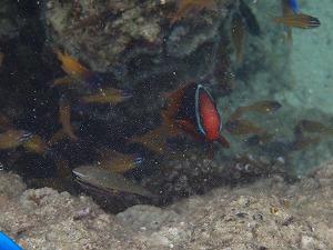 シュノーケリングお魚