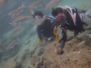 沖縄ダイビング水中