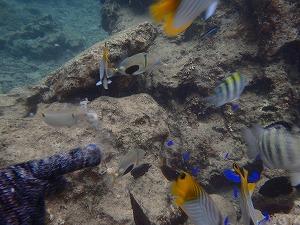 ダイビング熱帯魚