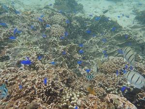 沖縄シュノーケリング珊瑚礁