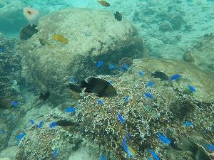 沖縄シュノーケリング珊瑚とお魚