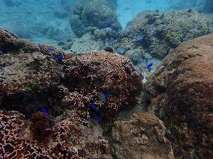 沖縄シュノーケリング珊瑚