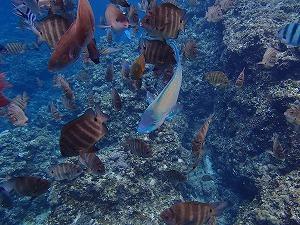 青の洞窟シュノーケリングお魚