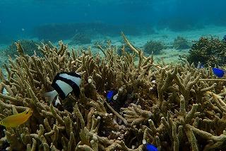 シュノーケリング 珊瑚礁