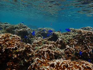 体験ダイビング珊瑚礁