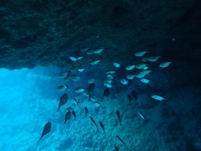 ダイビング洞窟内