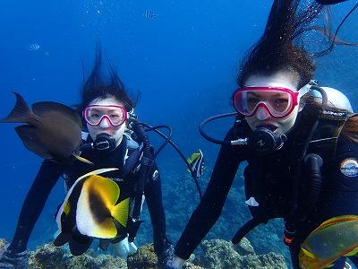 ダイビングお魚と写真