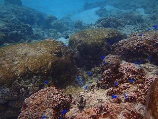 沖縄シュノーケリング水中