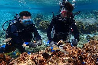 透明度抜群な海で体験ダイビング 初心者でも簡単