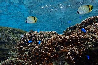 竜宮上のような綺麗な海で体験ダイビングしましょう