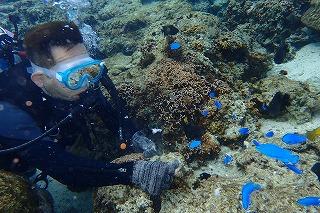 ダイビングの餌付けではカラフル熱帯魚が沢山集まる
