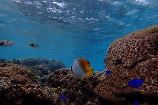 沖縄の綺麗な海をダイビングで楽しむ 初めてでも安心