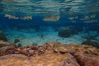 透明度抜群の海でお魚と一緒にシュノーケリング