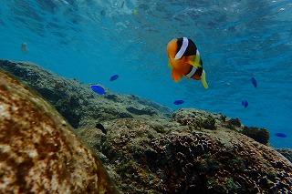 沖縄の綺麗な海とクマノミのいる海でシュノーケリング