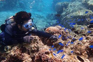 可愛い熱帯魚と一緒に体験ダイビング