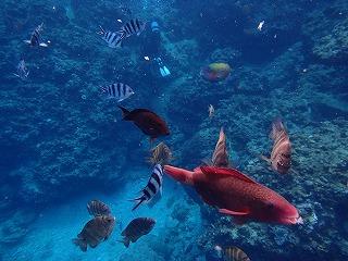 カラフルな熱帯魚と遊べるシュノーケリング