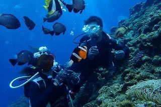 沢山の熱帯魚と泳ぐ体験ダイビング