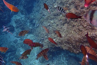 真栄田岬魚