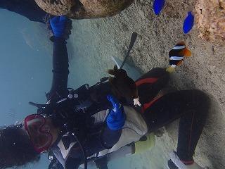 沖縄ダイビング子供とクマノミ