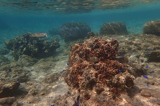 沖縄の海シュノーケリングポイント