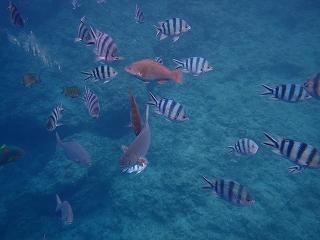 青の洞窟魚