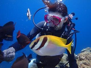 ダイビング魚の餌付け
