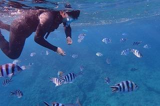 シュノーケリングで熱帯魚に餌付け