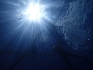 光が綺麗なシュノーケリング写真