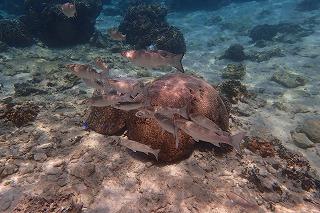 沖縄のきれいな海 シュノーケリング