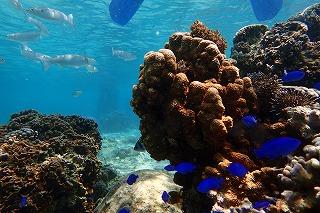 きれいな熱帯魚