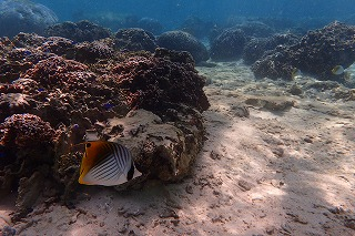 綺麗な熱帯魚