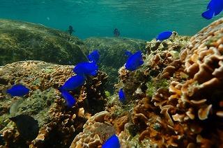 沖縄ダイビング 熱帯魚たち