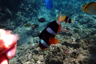 エサやり体験 熱帯魚
