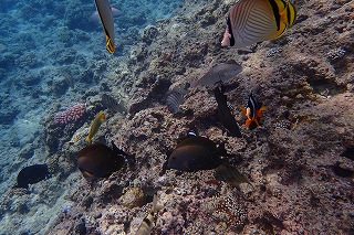 熱帯魚 餌やり体験