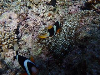 青の洞窟シュノーケリング 熱帯魚