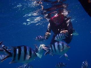 青の洞窟シュノーケリング 熱帯魚達と